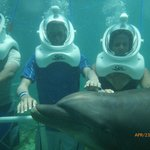 Dolphin Helmet Dive