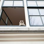 Disapproving Cat from one of the houses by the canal