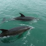 Beautiful dolphins.