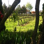 Foto de Vineyard View Bed & Breakfast