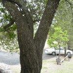 Nice big trees