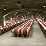 Barris de vinhos na adega refrigerada.