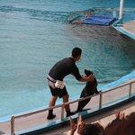 Dolphin Lagoon