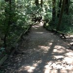 Nature Path - Armstrong Redwood State Park