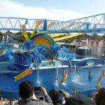 Show - Golfinhos
