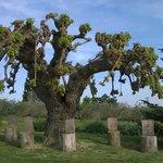 Agriturismo Il Parco di Kipo Foto