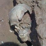 Bushman skeleton