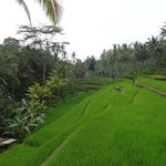Rice paddies as you descend