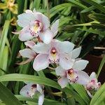 The orquids...