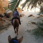 Canyon trail with Dahabhorses