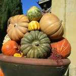 Franciscan Winery - Decorations for Fall Napa Valley