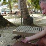 Adorables oiseaux