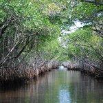 Die Mangroven