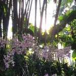 Trees, bushes, orchids, birds, little reptiles, animals