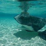 Snorkeling with Stingrays - Acquarius Sea Tours