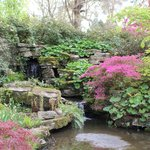 Beautiful pools and azaleas