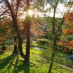 Le parc : un coucher de soleil illumine les bouleaux et les hêtres rouges