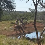 Watering hole outside Hippo unit