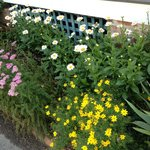 Gardens in bloom on Locust Street