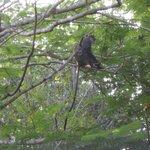 monkey eating his breakfast