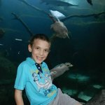 My son with 2 of the sea turtles in the background.