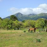 The volcano and two of the horses...just outside my room!