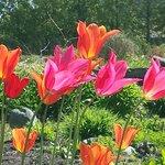 Tulips blooming alongside restaurant garden