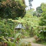 Notre petite maison dans la Jungle