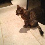 Crete Cat - A Few Slink Around