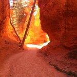 Sunset trail Bryce Canyon