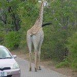 Zambezi Sun Groundskeeper