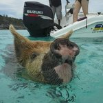 From the Thunderball 007 Tour: Pig Beach!
