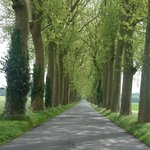 Love the tree lined roads