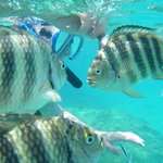 Prolific fish life - the snorkelling and diving are excellent
