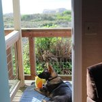 Dart watching from our deck