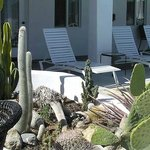 Lounge poolside next to the succulent garden