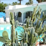 Succulent Garden and Pool