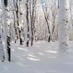 Du beau ski au Mont-Comi