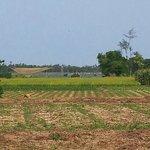 Cam Nam farm fields