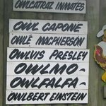 Names of the resident owls