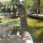 La Casa Di Napa Tropical Garden
