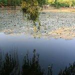 green lake3
