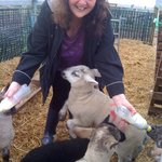 yours truly feeding the lambs
