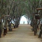Passagem dos bangaloos p praia