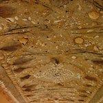 A shell art ceiling