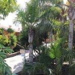Our garden/patio