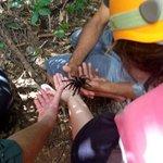 Me holding a wild tarantula in Belize