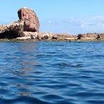 Sea Lions galore