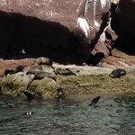 Sea Lions basking on rocks
