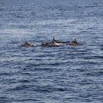 Croisière dauphins